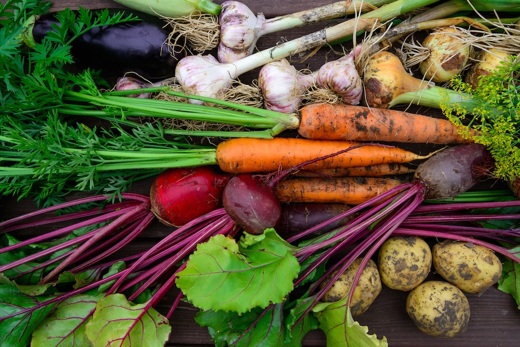 Harvest of Fresh organic vegetables