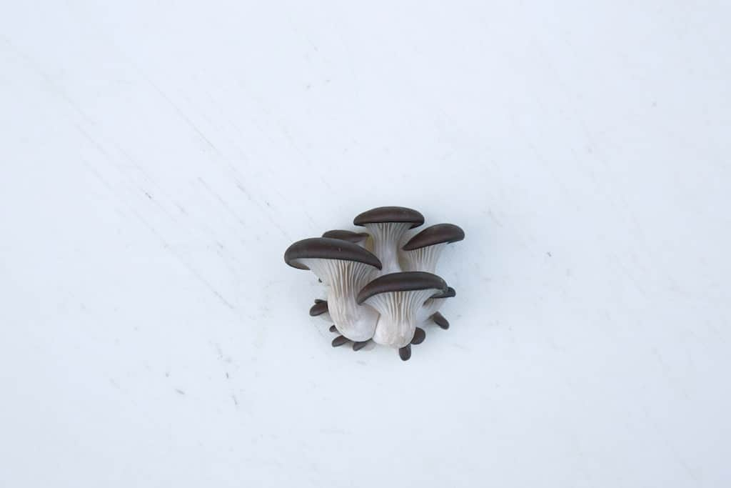 Blanc de Gris champignons